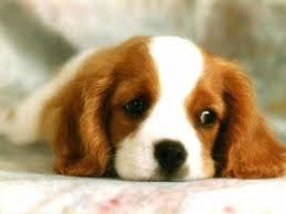 Consejos sobre perros