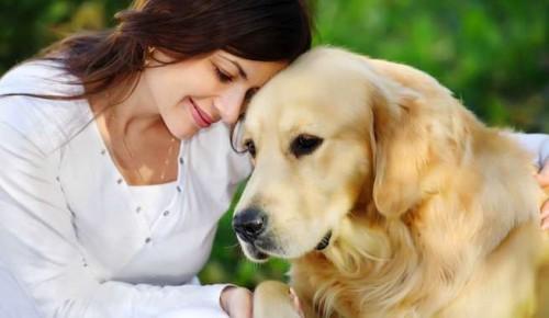 Cargas emocionales en nuestras mascotas