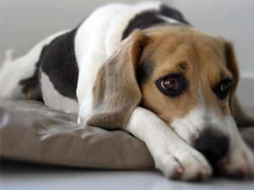 Como castigar adecuadamente un perro