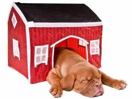Cuidados, consejos y trucos para tu perro