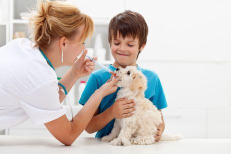 enfermedades en perros recién nacidos